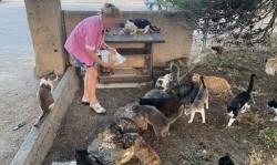 Alimentant gats